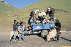 西藏牧人 免版税库存照片