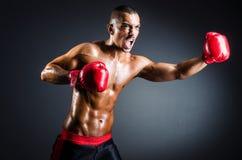 Боксер с красными перчатками Стоковые Изображения RF