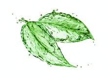 绿色水飞溅叶子 免版税库存图片