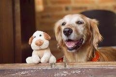 狗和朋友尾随玩具 免版税库存图片