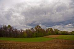 Поле фермы с пущей Стоковые Изображения RF