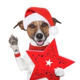 惊奇与一个当前配件箱的圣诞节狗 免版税库存照片