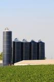 在大豆农场的筒仓 图库摄影