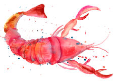 龙虾的水彩例证 库存照片