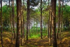 惊人的绿色森林 库存照片