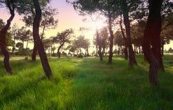 το δάσος Στοκ φωτογραφίες με δικαίωμα ελεύθερης χρήσης