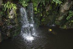 在雨林的瀑布 图库摄影