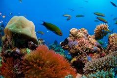 коралловый риф Стоковые Изображения RF