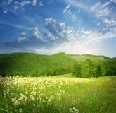 与花的山横向 免版税库存照片