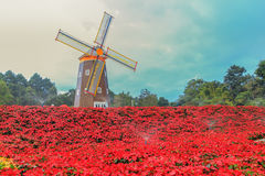 红色一品红和风轮机 免版税库存照片