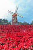 红色一品红和风轮机 免版税库存图片