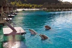 在热带海岛的海湾的海豚, 库存照片