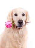 与花的狗 免版税图库摄影