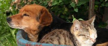 σκυλί γατών Στοκ φωτογραφία με δικαίωμα ελεύθερης χρήσης