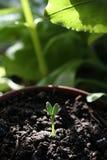 νέο φυτό Στοκ εικόνες με δικαίωμα ελεύθερης χρήσης