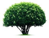 Στρογγυλό δέντρο Στοκ Εικόνες