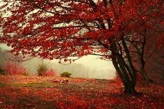 在秋天期间的美丽的森林 免版税库存图片