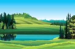 Ландшафт лета с озером и пущей Стоковая Фотография RF