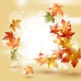 Φύλλα φθινοπώρου πέρα από τη φωτεινή ανασκόπηση Στοκ Φωτογραφία