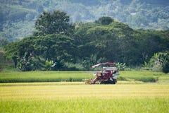 Συγκομίζοντας ρύζι Στοκ Εικόνα