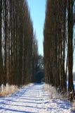 垂直的冬天横向 库存图片
