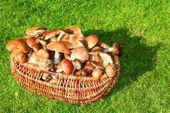 采蘑菇通配 库存图片