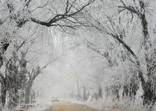 霜 免版税图库摄影