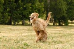 κυνηγόσκυλο Στοκ φωτογραφίες με δικαίωμα ελεύθερης χρήσης