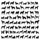 Популярные породы собаки Стоковые Фото