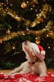 与圣诞节帽子的狗 免版税库存图片