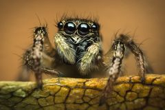 在叶子的蜘蛛 免版税库存照片