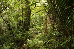 密集的密林 免版税库存照片