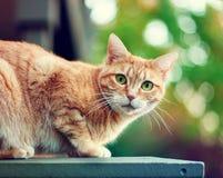 Одичалый кот Стоковая Фотография