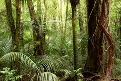 Тропическая пуща Стоковые Изображения