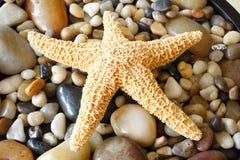 звезда Стоковые Фотографии RF