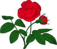 红色玫瑰。 向量 库存图片