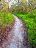 Тропка прерии болотистых низменностей прибрежная Стоковое Изображение RF