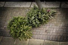 在路面的二棵圣诞树 免版税库存照片