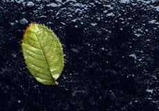 湿叶子 免版税库存照片