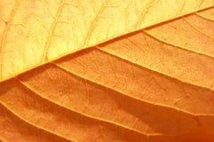 惊人的叶子纹理 库存照片