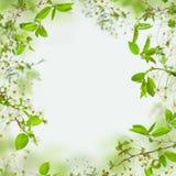 花和绿色叶子春天框架  免版税库存照片