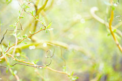 春天或夏天本质背景 库存照片