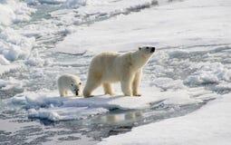 北极熊和崽 免版税库存照片