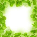Рамка зеленых листьев, предпосылка листва Стоковые Фото