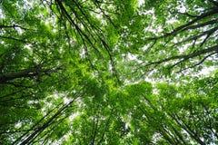 绿色树木天棚 免版税库存图片