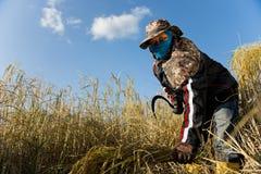Трудный работая хуторянин риса Стоковое фото RF