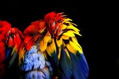 抽象五颜六色的羽毛 免版税库存照片