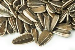 Сырцовые семена подсолнуха Стоковое Изображение RF