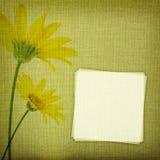 在织品背景的雏菊花 库存图片