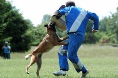 狗体育运动 免版税图库摄影